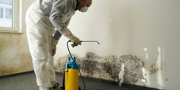 Mold Removal Services